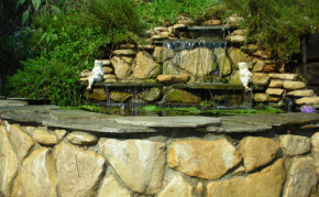 Backyard Pond Design Examples - Pond Construction - Pacific Ponds & Design