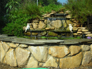 Backyard Pond Design Examples – Pond Construction – Pacific Ponds & Design