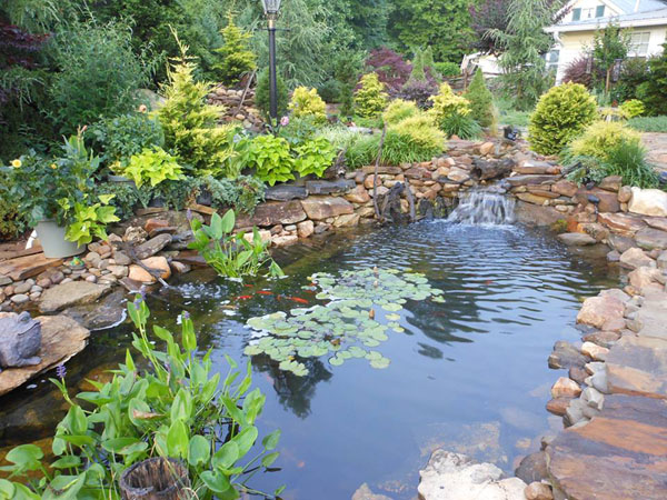 Pond construction backyard koi pond design examples for Pond yard design