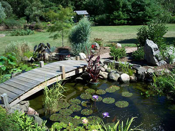 Pond ideas backyard ponds with bridge residential pond for Fish pond design