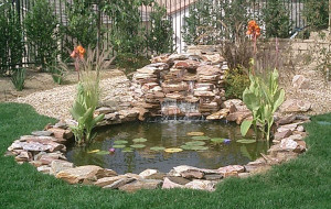 Koi Ponds: Residential Pond Construction: Koi Pond builders