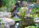 Pond Maintenance Jobs To Keep your pond healthy