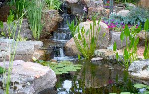 Pond building: Residential Pond Construction: Water Gardens: Fish ponds