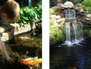 Ponds With Waterfalls Landscape – Custom Pond Construction