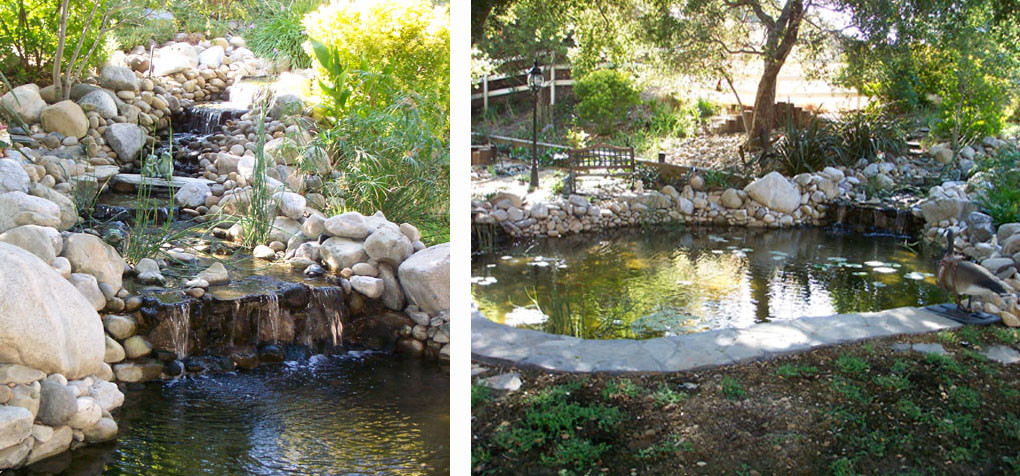 Pacific ponds design custom pond construction pond contractors Design pond