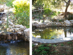 Pacific Ponds and Pond Design – Backyard Ponds