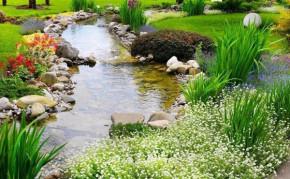 Pond Building: Waterscape Construction: Backyard ponds