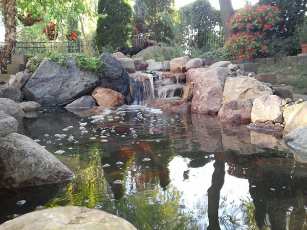 Hybrid koi pond pacific ponds and design for Koi pool water gardens cleveleys