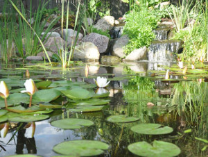 How to choose the right pond for you