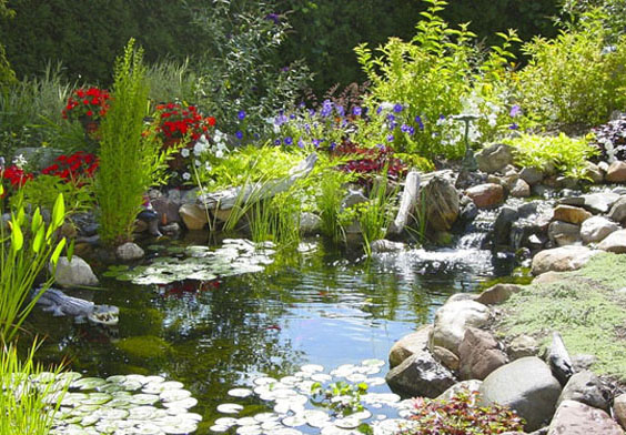 Backyard pond construction backyard pond ideas for Pond building ideas