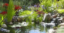 Natural backyard garden pond