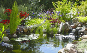 Natural backyard garden pond