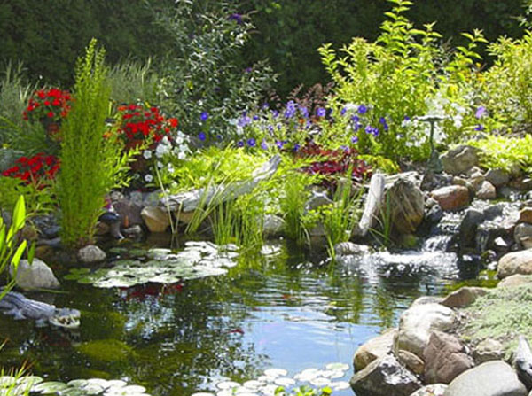 Image gallery natural pond landscaping for Natural koi pond