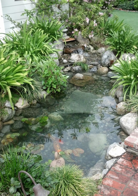 Garden pond pond building ideas for Building a goldfish pond