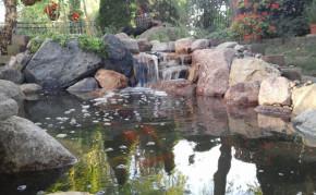 Hybrid Koi Pond