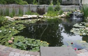 Large natural pond