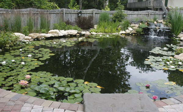How to design a commercial fish pond fish pond design for Large outdoor fish ponds