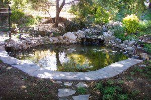 Large Backyard Pond Pacific Ponds Design Custom Pond