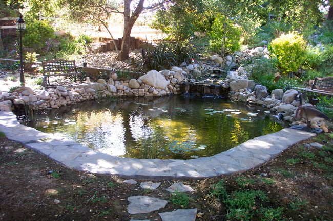 Large Backyard Pond Pacific Ponds Design Custom Pond