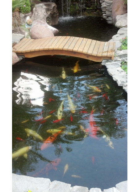 Koi pond with bridge - Pacific Ponds and Design