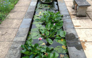 Commercial Ponds: contemporary pond style