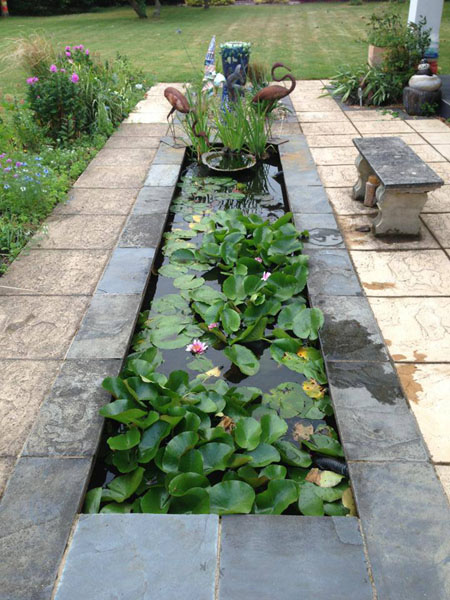Slate pond, Garden pond, Aquatic plants