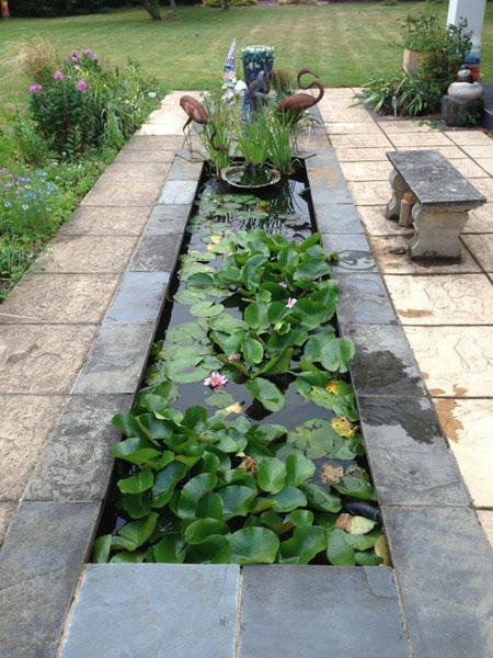 Slate pond, Garden pond, Aquatic plants