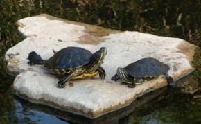 Building a turtle pond