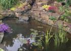 Pond netting keeps the predators away