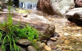 Pond And Stream - Backyard Pond