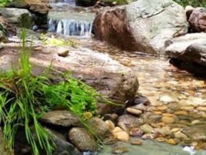 Pond And Stream – Backyard Pond